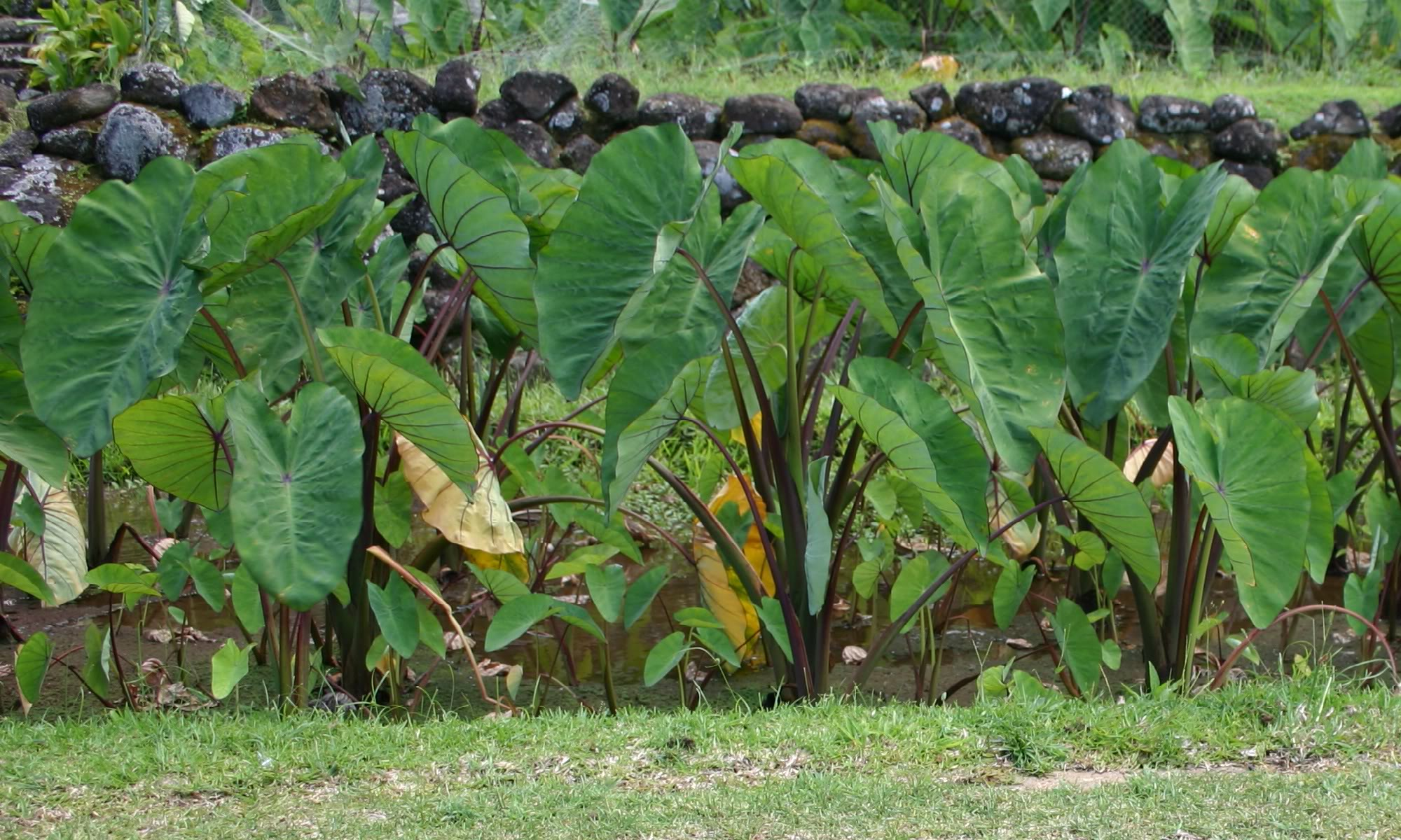 Agrobiodiversity And Ecosystem Services In The Pacific